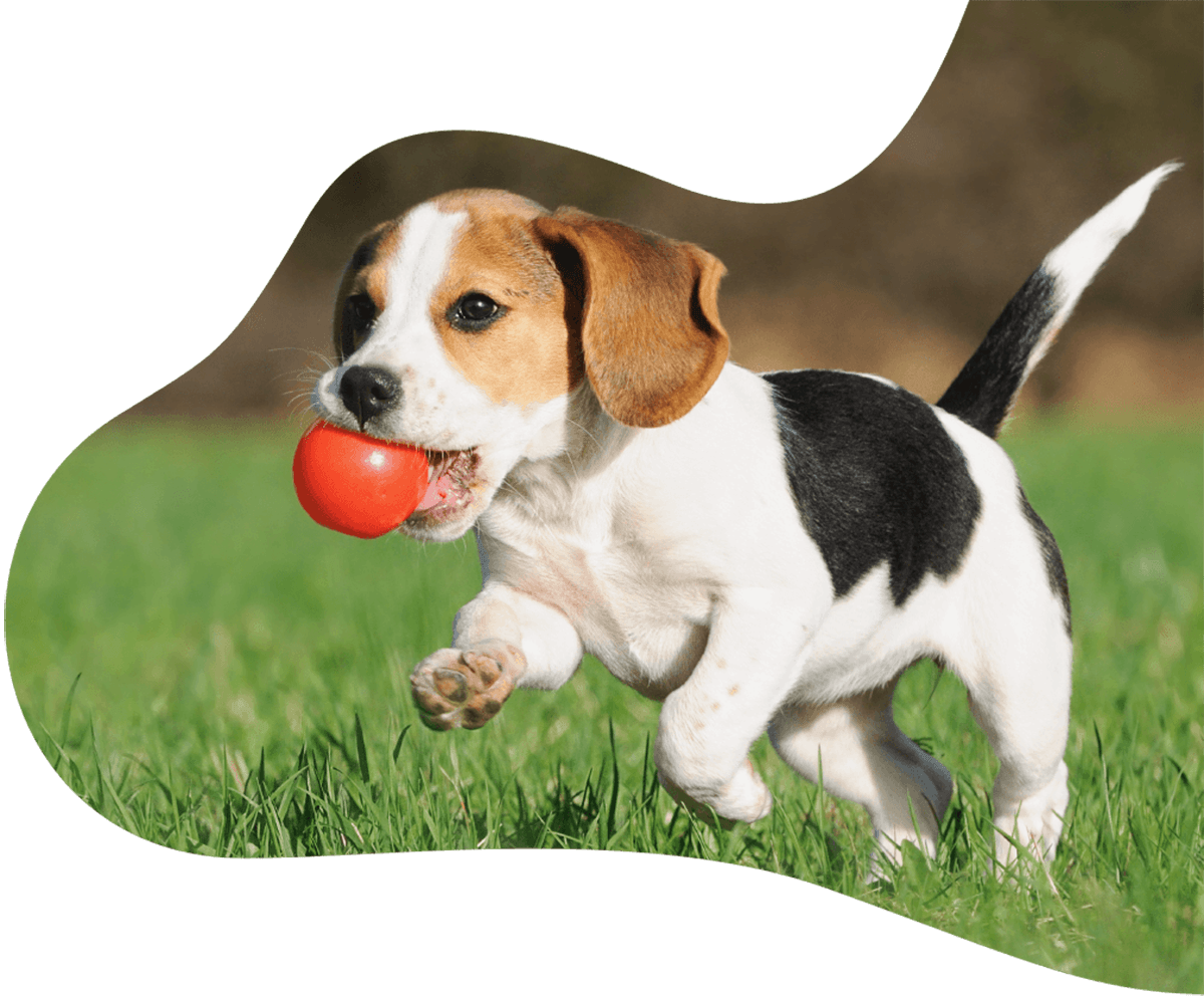 https://www.doggrounds.com/wp-content/uploads/2019/07/hero_image_01.png